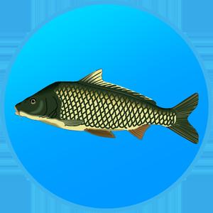 Иконка Обзор Реальной Рыбалки
